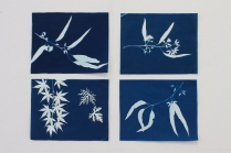 Alison is never idle! These are some fabulous cyanotype prints she has been playing with